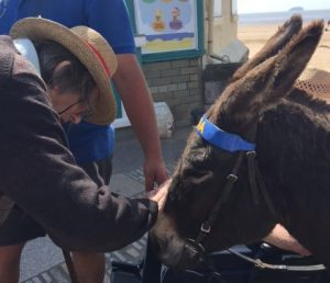Patting a donkey 300x258 - Care Homes Dorset & Residential Care Wiltshire
