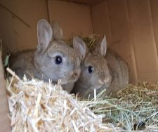 rabbits1 225x188 - Care Homes Dorset & Residential Care Wiltshire