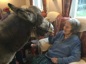donkey 1 300x225 - Care Homes Dorset & Residential Care Wiltshire