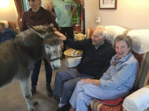 donkey 4 300x225 - Care Homes Dorset & Residential Care Wiltshire