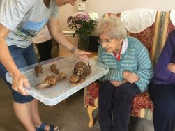 snail1 251x188 - Care Homes Dorset & Residential Care Wiltshire